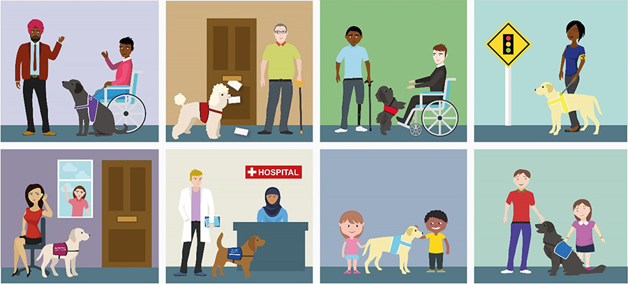 Sketch showing all the different types of guide dogs and their different colours